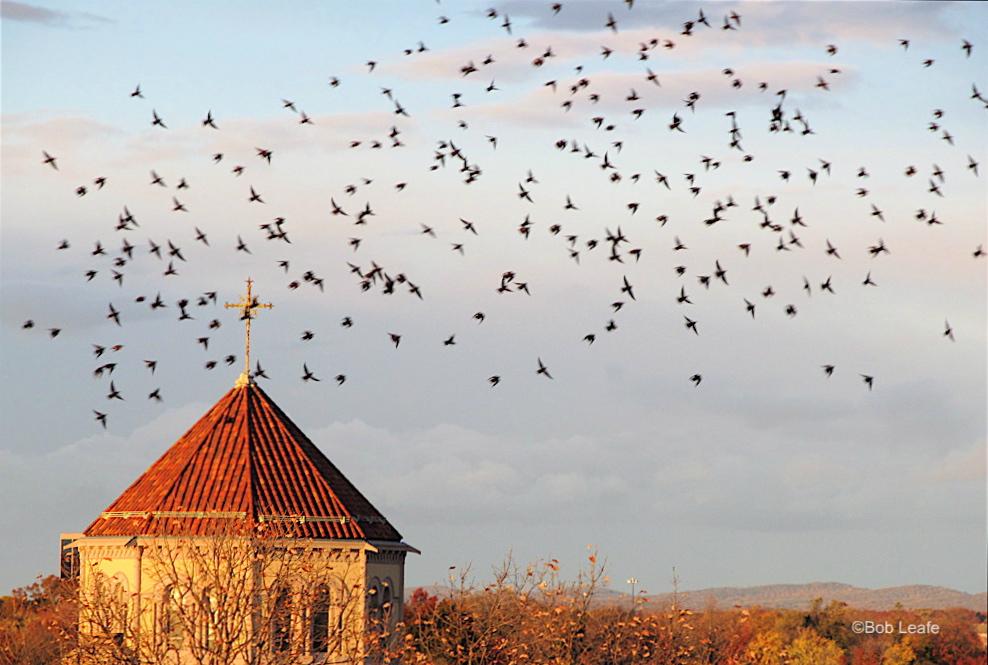 """""""Holy Trinity Church Flock"""""""
